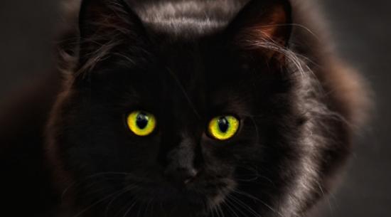 federica-tinti-eleganza-gatto